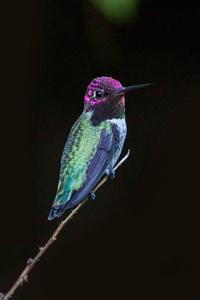 Hummingbird Close Up 4k