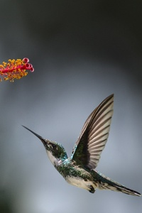 240x320 Hummingbird Macro