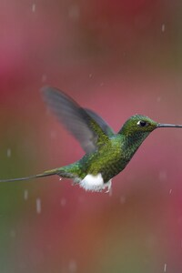 1080x1920 Hummingbird