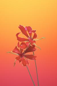 540x960 Ios 11 Flower Gloriosa