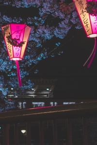 Japan Night Cherry Blossom Trees Lantern Glowing Night