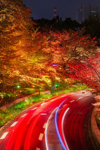 240x400 Japan Tokyo Roads Autumn Trees Night