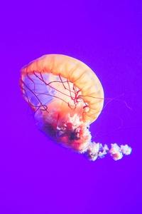 240x320 Jellyfish 12k