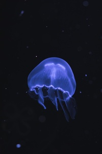 Jellyfish Underwater 5k