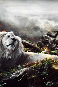 1080x2160 Jungle Lion Creative