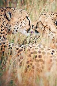 750x1334 Kiss Wild