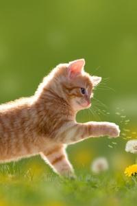 Kitten Cute 4k