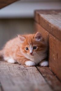 2160x3840 Kitten Cute