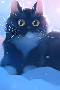 Kitten Snow