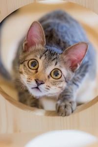 Kitten Staring At Owner