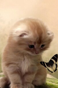 640x1136 Kitty Playing With Butterfly