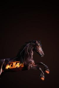 640x1136 Ktm Horse