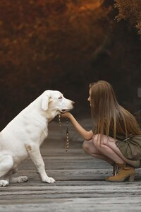 240x320 Labrador Retriever With Cute Girl