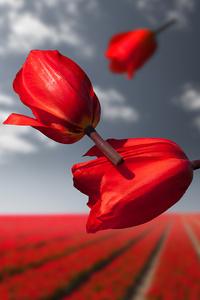 1080x2280 Lalibela Gravity Flowers 4k