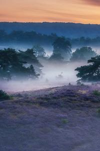 1440x2560 Landscape Field Outdoor Sky