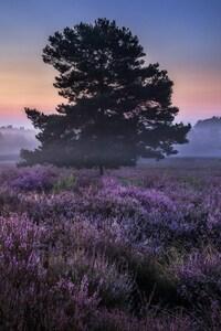Landscape Plants Trees