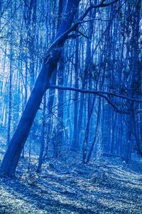 Last Blue Light Of Evening In Woods