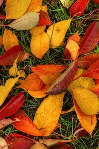 Latest Autumn Leaves