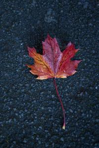 Leaf Autumn 5k