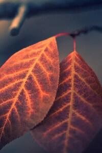 1080x1920 Leaves 2