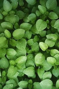 Leaves Green 4k