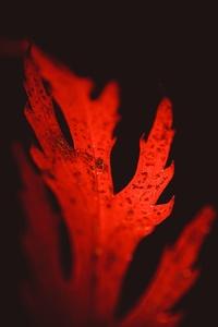 480x854 Leaves Macro