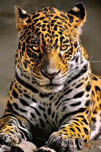 540x960 Leopard 4k Glowing Eyes