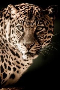 Leopard 5k