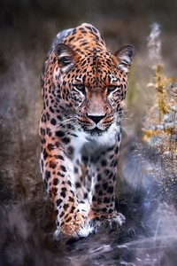 240x320 Leopard Big Cat