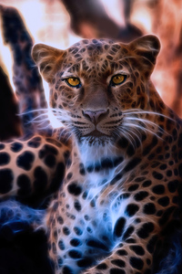 1080x2280 Leopard Crystal Glowing 4k