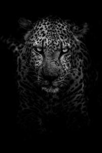 Leopard Dark Monochrome 5k