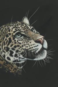 Leopard Painting 4k