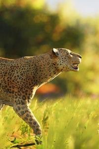 1080x2280 Leopard Wild 4k