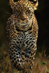 1080x2280 Leopards 4k