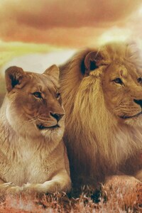 240x400 Lion and Lioness