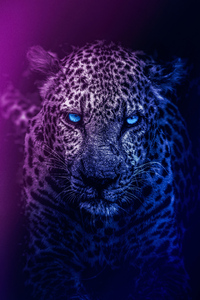 1080x2280 Lion Blue Eyes