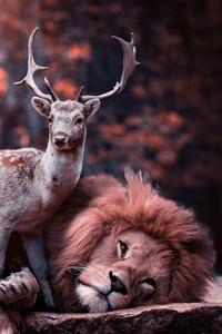 1080x2280 Lion Deer