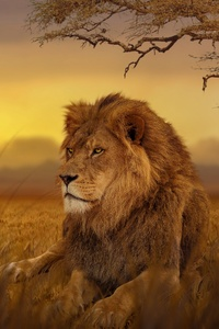 2160x3840 Lion Forest 5k
