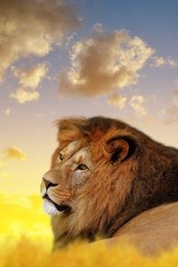 2160x3840 Lion Ultra Hd 4k
