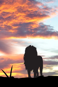 240x400 Lions Africa Silhouette Sunset