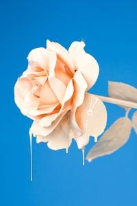 Liquid Rose 4k