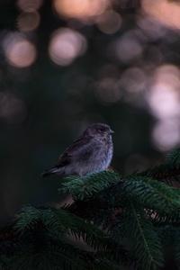 Little Bird In Forest