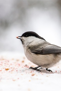 480x800 Little Bird In Forest Winter
