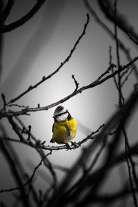 480x854 Little Yellow Bird 5k