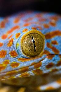 Lizard Eye Macro 5k