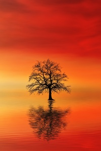 Lone Tree In Water At Dusk