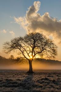 Lone Tree Oak 5k