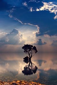 Lonely Tree Sunbeams