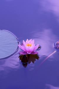 540x960 Lotus Flower 5k