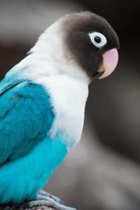 1080x2160 Love Bird
